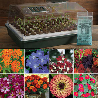 Flower Seed Bio Dome Collection Image