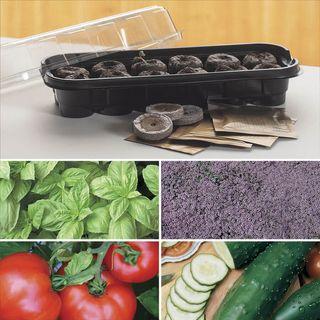 Windowsill Herb & Veggie Starter Kit Image