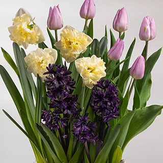 Spring Surprise Bulb Garden Image