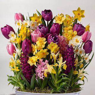 Seasons Renewal Bulb Garden Image