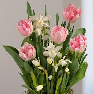 Spring Kiss Bulb Garden Image