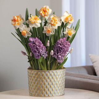 Spring Fling Bulb Garden Image