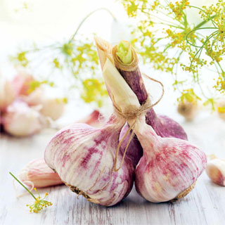 Garlic German Red