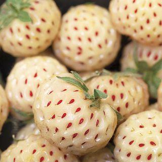 Pineberry Strawberry