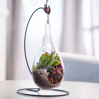 Hanging Teardrop Succulent Garden