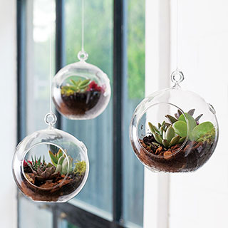 Hanging Bubble Succulent Garden