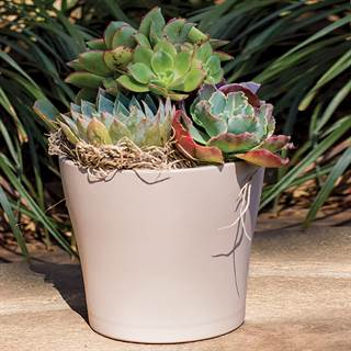 Succulent Mixed Garden in Taupe - 4-Inch