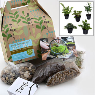 Do-it-Yourself Plant Terrarium Kit with Seeds