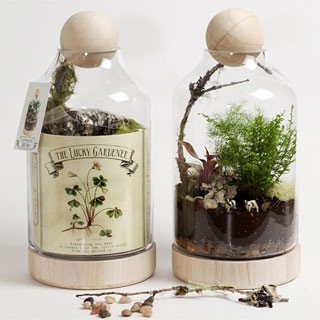 Tropical Paradise Terrarium Kit