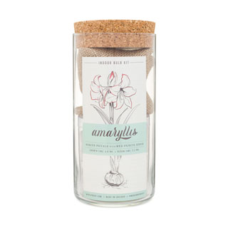Modern Sprout Amaryllis Bulb Kit