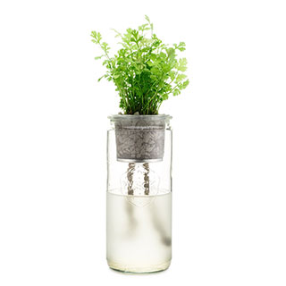 Eco-Planter - Cilantro