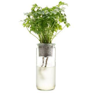 Eco-Planter - Flat Leaf Parsley