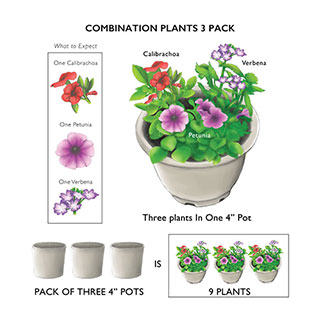 SunPatiens Summer Salsa Impatiens Combination (pack of 3)