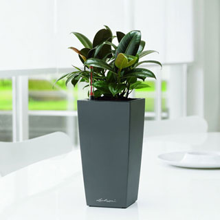 Lechuza White 10 inch All in One Maxi Cubi Self Watering Planter