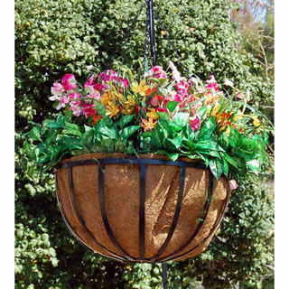 Newport Hanging Basket