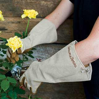 Jackson & Perkins Rose Gloves Image