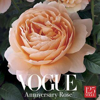 Vogue Anniversary Rose™