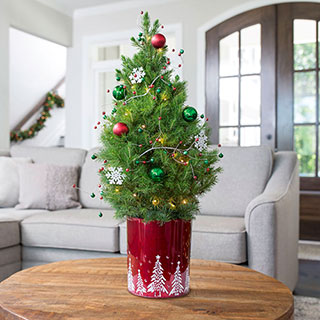 live decorated tabletop christmas trees jackson perkins