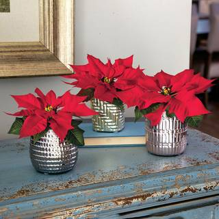 Elegant Dreams Poinsettia Trio