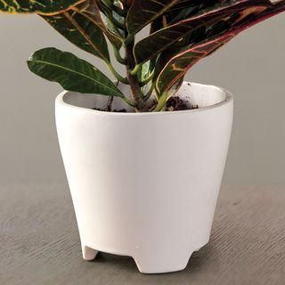 Croton Houseplant Image