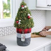 Cozy Rosemary Tree