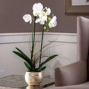 Moth Orchid in Metallic Cachepot