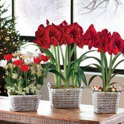 Winter Wonderland Bulb Garden