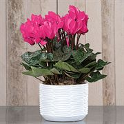 6-Month Flowering Gift Plant Club