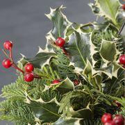 Holly Jolly Evergreen Tabletop