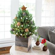 Cozy Christmas Tree - Brown Star