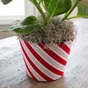 Peppermint Twist Hydrangea