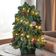 Cut Evergreen Christmas Tree Centerpiece