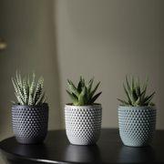Ombré Succulent Trio