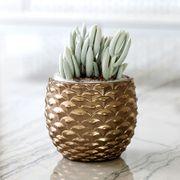 Crystal Cone Succulent