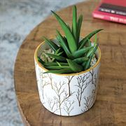 Luxe Birch Succulent