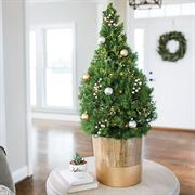 Believe in Christmas Succulent