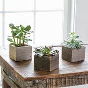 Succulent Cubes - Set of 3
