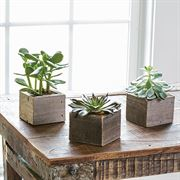 Succulent Cubes - Set of 3
