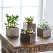 Succulent Cubes - Set of 4