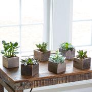 Succulent Cubes - Set of 6