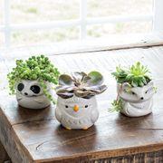 Woodland Creatures Succulent Trio