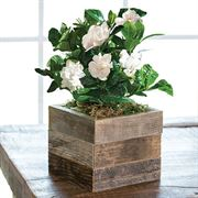 Gardenia in Reclaimed Wood Thumb