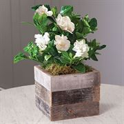 Gardenia in Reclaimed Wood Alternate Image 1