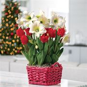Winter Bliss Bulb Garden