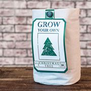 Christmas Tree - Paper Grow Bag