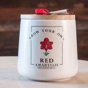 Grow Your Own Amaryllis Kit