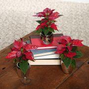 Winter Wishes Poinsettias Trio