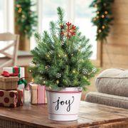 Joy of Christmas Tree