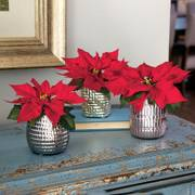 Elegant Dreams Poinsettia Trio - Red