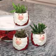 Holly Jolly Succulent Trio